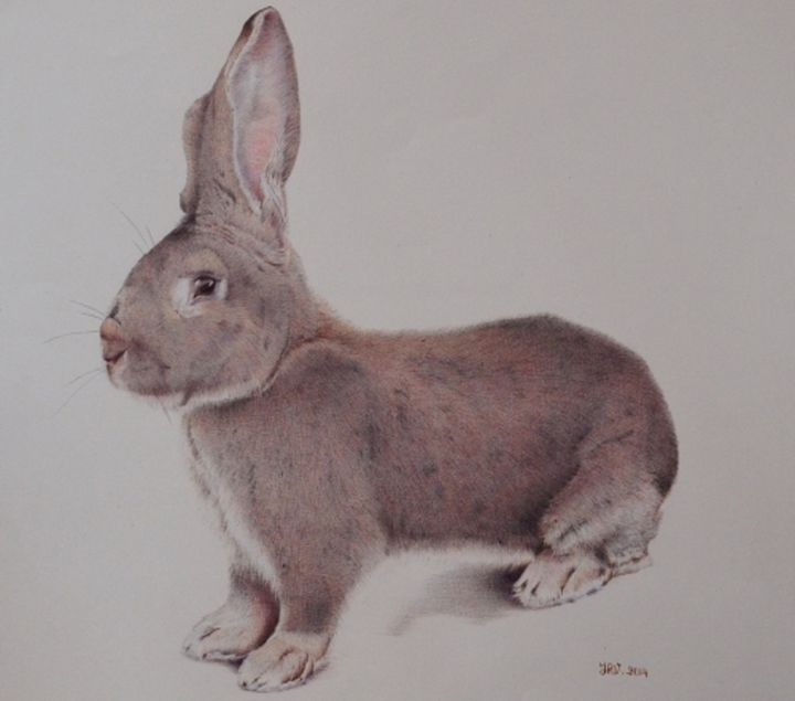 Le géant des Flandres - Stylo bille - Drawing,  40x50 cm ©2015 by Valérie Jouffroy Ricotta -                                                            Illustration, Paper, Animals, lapin, géant des flandres, stylo bille, illustration