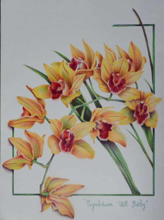 "Cymbidium ""Will Stutley"" - Drawing,  32x24 cm ©2016 by Valérie Jouffroy Ricotta -                                                            Figurative Art, Paper, Botanic, botanique, cymbidium will stutley, orchidée, stylo bille"