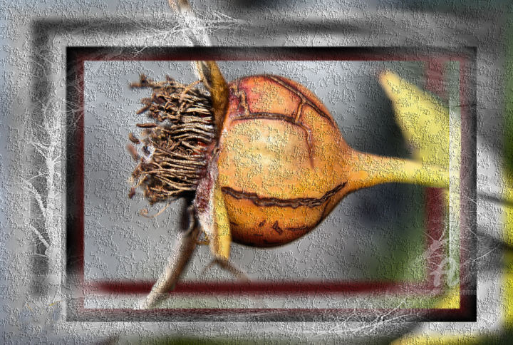 Poil a gratter - Digital Arts,  34.3x50.8 in ©2019 by Veronelle -                                            Photorealism, Still life, Cynorrhodon, poil a gratter, fruit rosier, veronelle