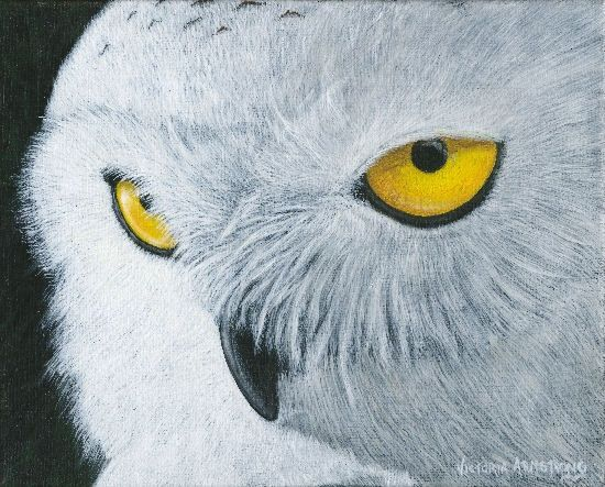 All Eyes On Us: Snowy Owl - Painting,  10x12 in ©2007 by Victoria Armstrong -            snowy owl, owl, owl eyes, acrylic painting