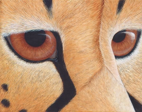 All Eyes on Us: Cheetah - Painting,  11x14 in, ©2009 by Victoria Armstrong -                                                              Cheetah eyes close up