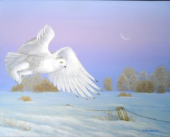 Dawn Splendor - Painting,  16x20 in, ©2010 by Victoria Armstrong -                                                                                                                                                                          Figurative, figurative-594, snowy owl in flight at dawn during the winter over a farmer's field