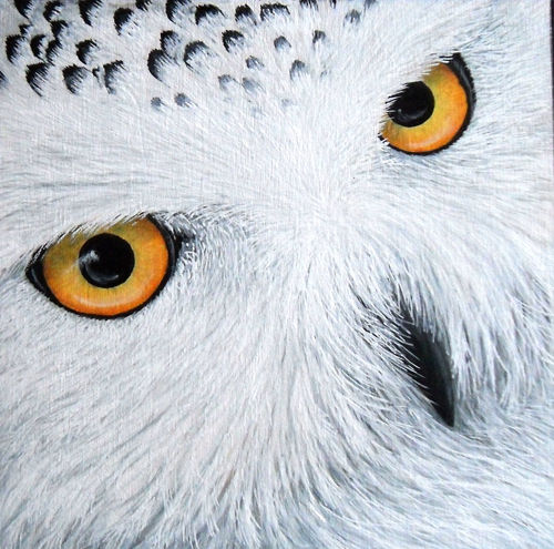 "Vignettes - ""Olivia"" - Painting,  6x6x2 in, ©2016 by Victoria Armstrong -                                                                                                                                                                                                                                                                                                                                                                                                                                                                                                                                              Figurative, figurative-594, Animals, owl, snowy owl, owls, eye, eyes, close up, painting, acrylic"