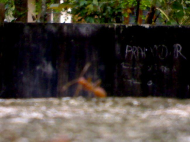 """Photography titled """"ant"""" by Vipesh Pillai, Original Art,"""