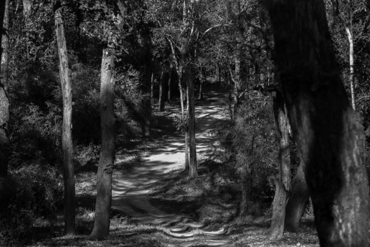 """Photography titled """"Road through the fo…"""" by Vishesh Unni Raghunathan, Original Art,"""