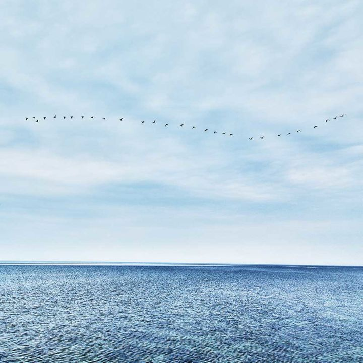 """Photography titled """"Sea and Birds"""" by Vitomirov, Original Art, Digital Photography"""