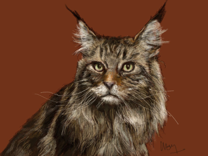 portrait d'un Maine Coon - Digital Arts, ©2014 by Sandrine Wely -                                                                                                                                                          Animals, Animaux domestiques, chats