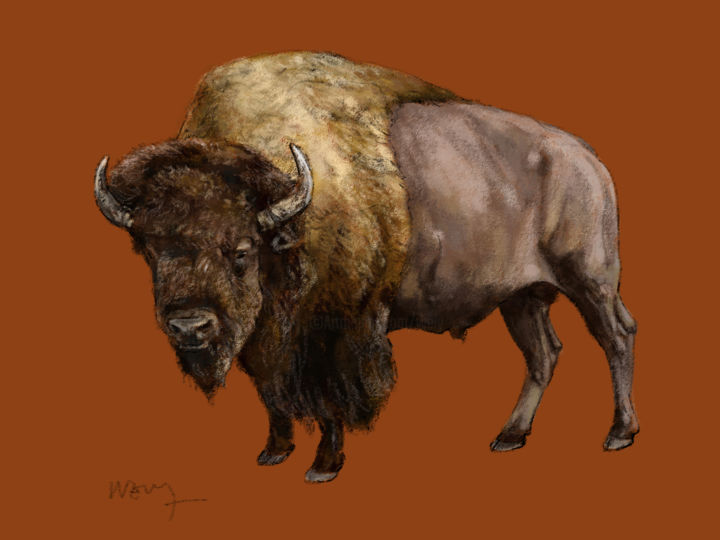 Bison - ©  Animaux, bisons Online Artworks