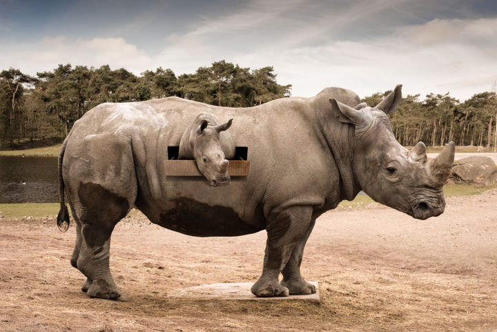 Mon Rhino protégé - Photography,  60x90x2 cm ©2018 by Xavier WTTRWULGHE -                                                                                                                                                Figurative Art, Illustration, Modernism, Surrealism, Aluminum, Other, Animals, Cinema, Fairytales, Fantasy, Rhino, rhinocéros, montage, illustration, surréalisme