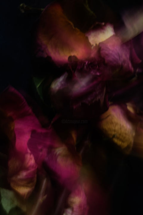 """Photography titled """"THEATER OF ROSES"""" by Yana Yushkevich, Original Art, Digital Photography"""