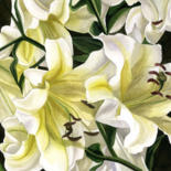 """Painting titled """"yellow lilies water…"""" by Alfred Ng, Original Art, Watercolor"""