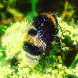 """Photography titled """"BEE"""" by Bel Kréati Collections, Original Art,"""