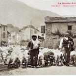 Moutons et transhumance by Michel Bettendroffer