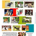 CHIENS/CHATS/ANIMAUX DE COMPAGNIE (ANIMALS & PETS) by Xian, collectif d'artistes