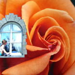 """Photography titled """"Roses quand reviend…"""" by Jean-Guy Alarie, Original Art, Manipulated Photography"""