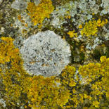 Mousses, lichens, oxydations by ALAIN BRASSEUR