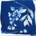 Cyanotypes by pennygp