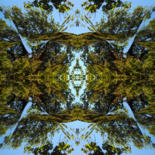 Forest Abstractions by Kenneth Grzesik